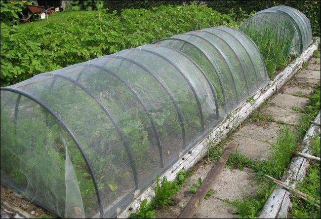 insektnet overdaekning af groentsager