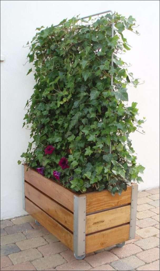 plantekasser med espalier og efoej