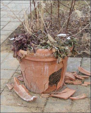 frost og havekrukker