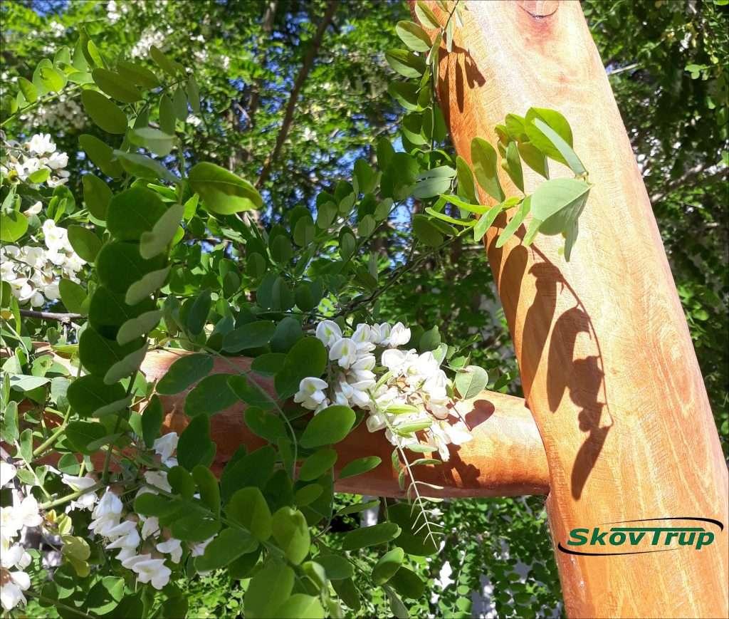 robinie blomster med skovtrup logo